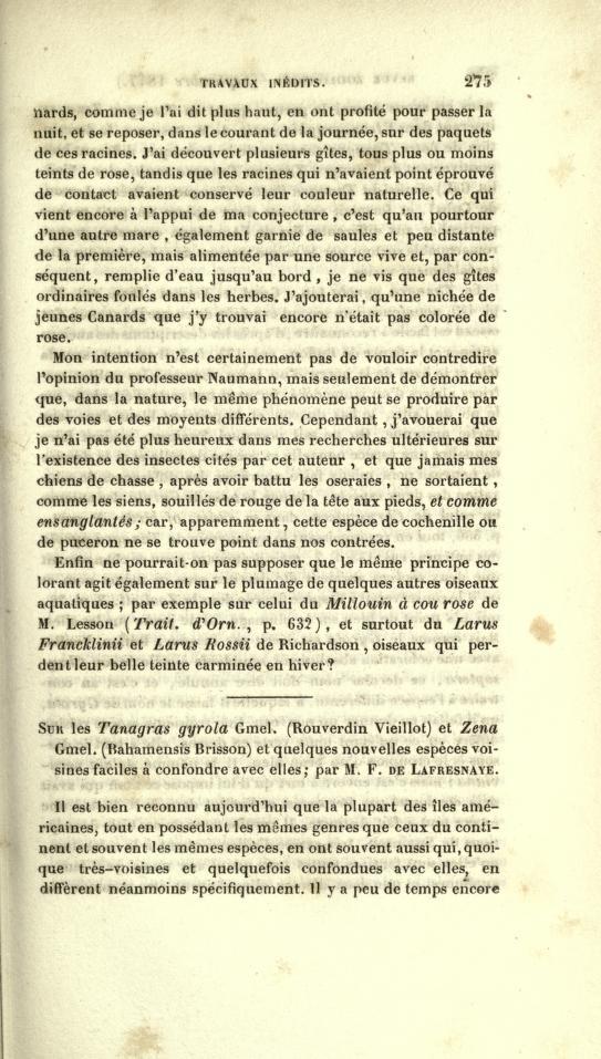 Sur les Tanagras gyrola Gmel. (Rouverdin Vieillot) et Zena Gmel. (Bahamensis Brisson) et Quelques Nouvelles Especes Voisines Faciles a Confrondre Ave Elles